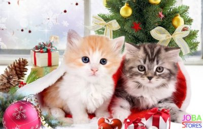 Diamond Painting Kerst Kittens 30x40 - rond